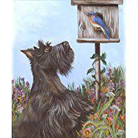 Scottish Terrier Curious-GF