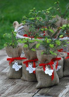 cute idea, burlap bag for giving a plant...