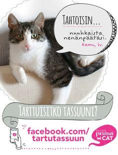 Koditon kissa Kamu pitää erityisesti muiden kissojen seurasta ja hyrisee herkuista.