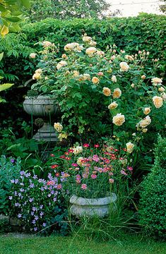 urn with yellow rose, Clive Nichols Garden Photography.  So much to like here.  Mix of colors; flower petal composition and size; vertical layout.