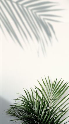 Palm leaf border design element on a white background | free image by rawpixel.com
