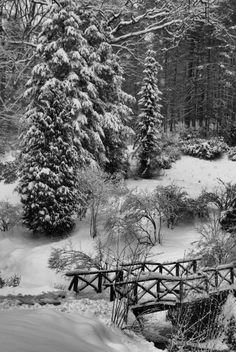 A blanket of snow in the gardens at Biltmore Estate in Asheville