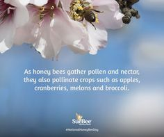 National Honey Bee Day Save The Bees, Honey