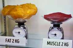 Picture is showing fat and of muscle. that's My quest for you is find out how much kcal's are in the of fat? Fat Vs Muscle, Muscle Mass, Gain Muscle, Lose Inches, Different Perspectives, Thing 1, Trying To Lose Weight, Weight Management, Food For Thought