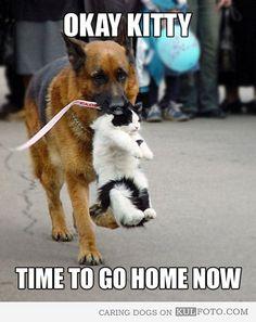 Okay, kitty…