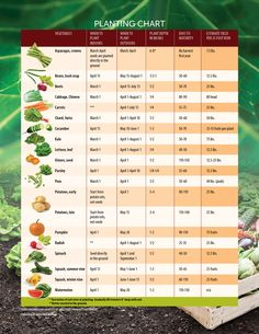 Helpful tips on when to start planting seeds in Ohio for the perfect garden Sow what? Helpful tips on when to start planting seeds in Ohio for the perfect garden.Sow what? Helpful tips on when to start planting seeds in Ohio for the perfect garden. When To Plant Vegetables, Planting Vegetables, Vegetable Garden, Perennial Vegetables, Veggies, Garden Seeds, Planting Seeds, Garden Plants, Fruit Garden