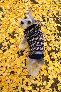 Another pup that looks like Bowzer, but not him. Love the yellow leaves to add contrast.