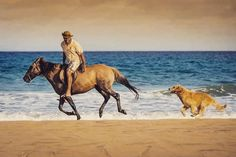 #cavalo #praia #portugal #portosanto #madeira #horse #hotel #vilabaleira #vilabaleiraresort #horseriding #dog #sea #sand #travel #resort by vilabaleira