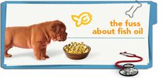 Should you be adding fish oil to your pet's food? #pet-health-tips from Petplan #pet-insurance