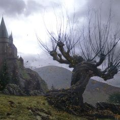 Creating the Whomping Willow tree required close collaboration between the arts, visual effects, and special effects departments. The combined efforts of all three departments resulted in the creation of an actual tree, albeit in parts, which ended up standing eighty-five feet tall. #HarryPotter