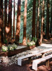 wedding in the redwoods.....been to more then one wedding here at Armstrong Woods