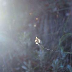 La naturaleza es pura inspiración a veces tan exuberante salvaje abundante... otras solitaria y delicada. . . . . . #terrario #terrarios #enelbosque #plants #plantas #nature #naturelovers #plantslovers #bosque #forest #instagood #inspiration #inspiracion #sierradehuetor #granada #luz #light #sunset #sun #landscape #landscapelover #minimal