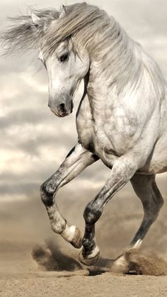2283 best equus images in 2019 beautiful horses pretty horses rh pinterest com how to tame a equus in ark mobile how to tame a equus in ark mobile