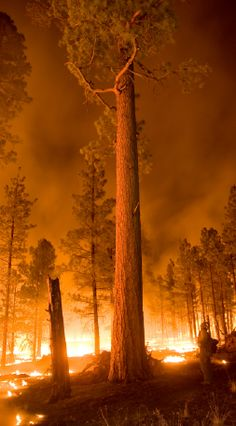 Whitewater-Baldy Fire, New Mexico on June Credit: Kari Greer, USFS Gila National Forest.