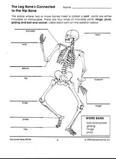 Top 10 anatomy coloring pages for your toddler pinterest ear human body interactions mrs o ccuart Images