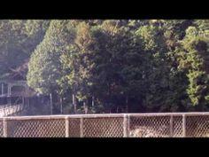 京都嵐山トロッコ紅葉めぐり