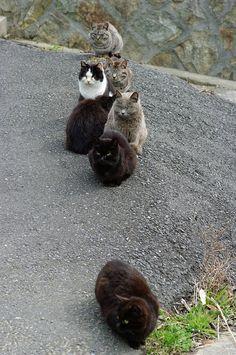 Tashirojima - cat island
