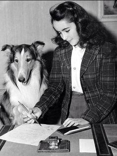 Lassie, Elizabeth Taylor
