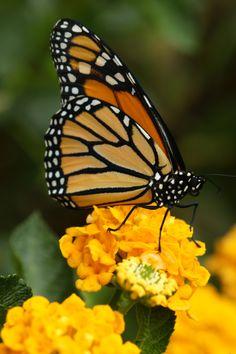 Build a butterfly garden