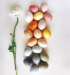GORGEOUS natural egg dying found via @taylergolden hop on over (🙊) for details on how to create these beautiful colored eggs.