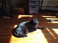 "From Jenna 'Parks' Morrison... ""This is my black beauty, Gracie. When I adopted her the ladies at the rescue kept thanking me, saying that black cats are often hard to find homes for. I love my sweet Miss Grace Grace""  For the month of October, Cat Faeries is celebrating black cats. We will post pictures of our customer's cuties and donate 1% of our October sales to several black cat rescue groups. You can find out more at www.catfaeries.com/blog/celebrating-black-cats-in-october/"