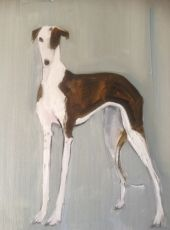sally muir - a dog a day exhibition