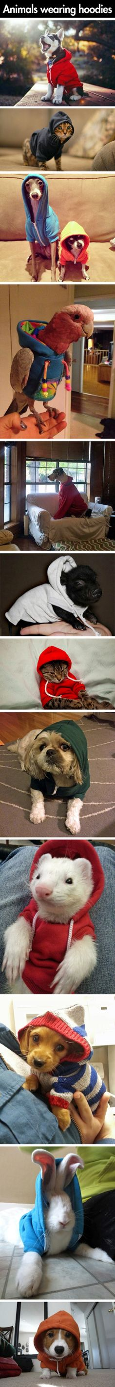A collection of adorable animals in hoodies.