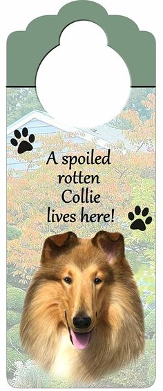 Collie Wood Sign 'A Spoiled Rotten Collie Lives Here'with Artistic Photograph Measuring 10 by 4 Inches Can Be Hung On Doorknobs Or Anywhere In Home ** To view further for this item, visit the image link. (This is an affiliate link and I receive a commission for the sales)