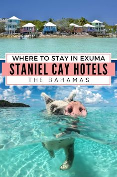 Want to know more about best Staniel Cay hotels, Exumas resorts, and other Staniel Cay accommodation? Look no further for Staniel Cay Bahamas hotels info. Exuma Bahamas Resorts, Bahamas Hotels, Bahamas Vacation, Vacation Spots, Bahamas Pigs, Cat Island Bahamas, Harbour Island Bahamas, Exuma Island, Caribbean