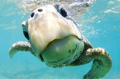 The winners of the annual Ocean Art Underwater Photo Contest have been revealed. The awards showcase the best in underwater photography and shine a light on what lurks in the depths of the sea. Cute Funny Animals, Cute Baby Animals, Animals And Pets, Underwater Photography, Animal Photography, Nature Photography, Photography Guide, Film Photography, Street Photography