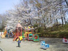 Cherry Blossoms at Kitamoto Children's Park