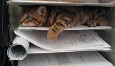 That time I brought my kitten to work Click here for more adorable animal pics!