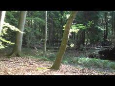 ▶ Guidet meditation i skoven - YouTube