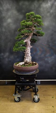 House Plants Decor, Plant Decor, Bonsai Tree Types, Bonsai Styles, Asian Garden, Miniature Trees, Potted Trees, Bonsai Garden, Small Gardens