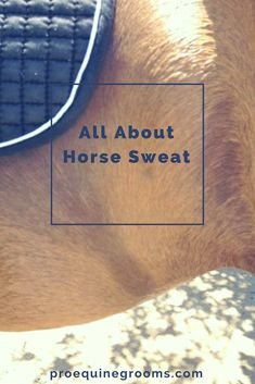 What you need to know about horse sweat.