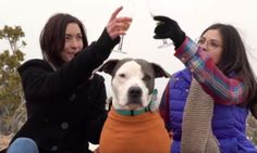 Animal Shelter's Version Of 'The Bachelor' Is Way Better Than The Real Thing