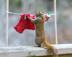 Meanwhile, completely unaware of how her wonderful cooking has brought on a strict exercise regime and healthy diet for her son, Supersquirrel's mother goes about her chores happily thinking of her recent visit to him!