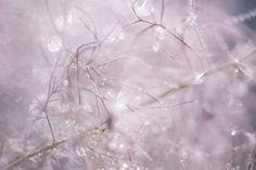 mlodzikova-magic-plant-9.jpg (800×534)