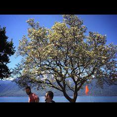 #lac #lake #lacleman #landscape #lakeofgeneva #picoftheday #pictureoftheday #photooftheday #igerssuisse #igerslausanne #vevey #switzerland #nature #grammont #mountain#magnolia#tree by zephyr83