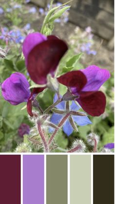 WALK THE TALK - Snowpea flower from my garden this summer - love the colours.  Check out the blog to find out how to track your story x