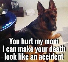 Wicked Training Your German Shepherd Dog Ideas. Mind Blowing Training Your German Shepherd Dog Ideas. German Shepard Quotes, German Shepard Training, Dog Training Videos, Training Your Dog, Training Tips, Positive Dog Training, Puppy Classes, Schaefer, Dog Activities