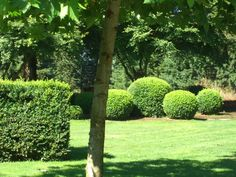 Boxwood Garden :: Hedges and Edges