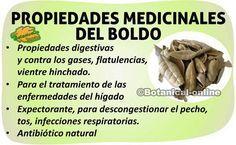 propiedades medicinales del boldo y sus beneficios para curar enfermedades