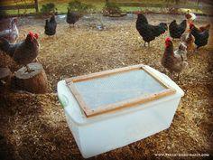 DIY chicken brooder