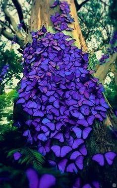Woww so beautiful! Violet butterflies Woww so beautiful! Violet butterflies Woww so beautiful! Beautiful Bugs, Beautiful Butterflies, Amazing Nature, Beautiful World, Beautiful Places, Beautiful Pictures, Stunningly Beautiful, Absolutely Stunning, Beautiful Creatures