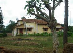 Trunks, 1, Plants, Houses, Drift Wood, Planters, Plant, Planting