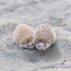 Cute little hedgehogs   tag a friend!