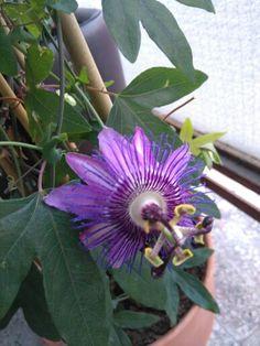 Balcony, Garden, Plants, Garten, Lawn And Garden, Balconies, Gardens, Plant, Gardening