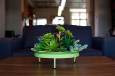 Planters With a Mid-century Feel | Babble