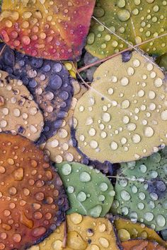 colorful leaves & rain drops